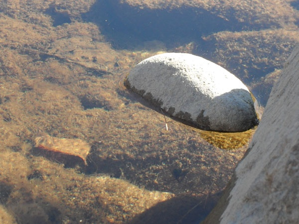 Камешек на тонкой корочке льда лежит, ждет солнышка