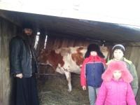 Ещё раз большое спасибо всем, кто помог нам купить корову!