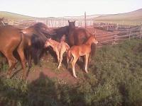 Коняшки